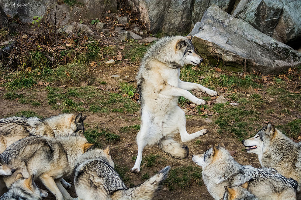 Premios de Fotografia de Animales Domesticos 2017 6