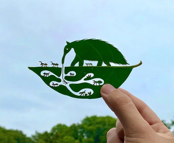 lito leafart hojas miniatura