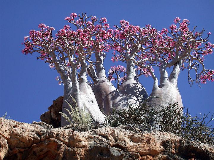 Socotra.Cultura Inquieta2
