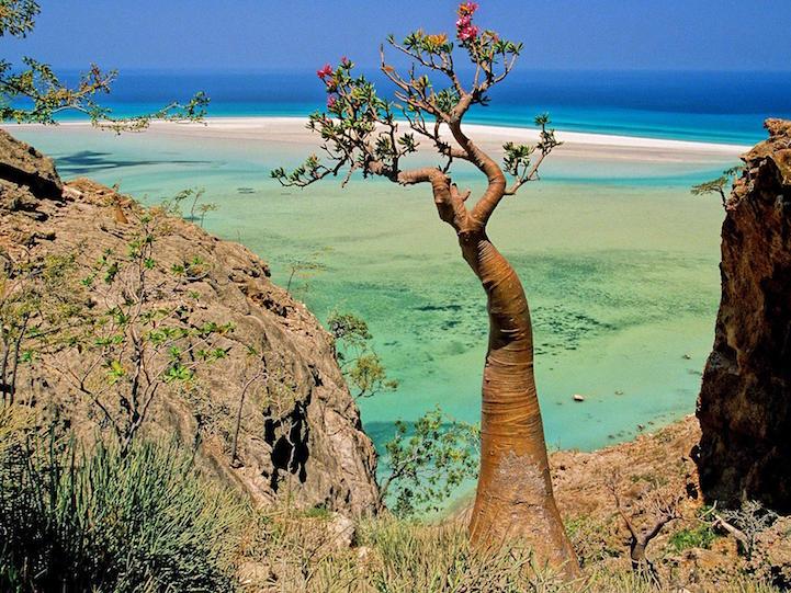 Socotra.Cultura Inquieta3