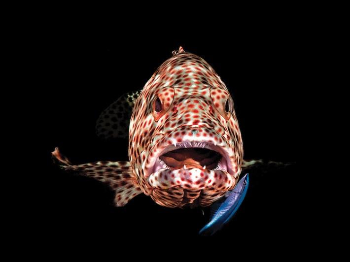 Scuba Diving 13 magazine concurso fotografía submaina mar vidasalvaje