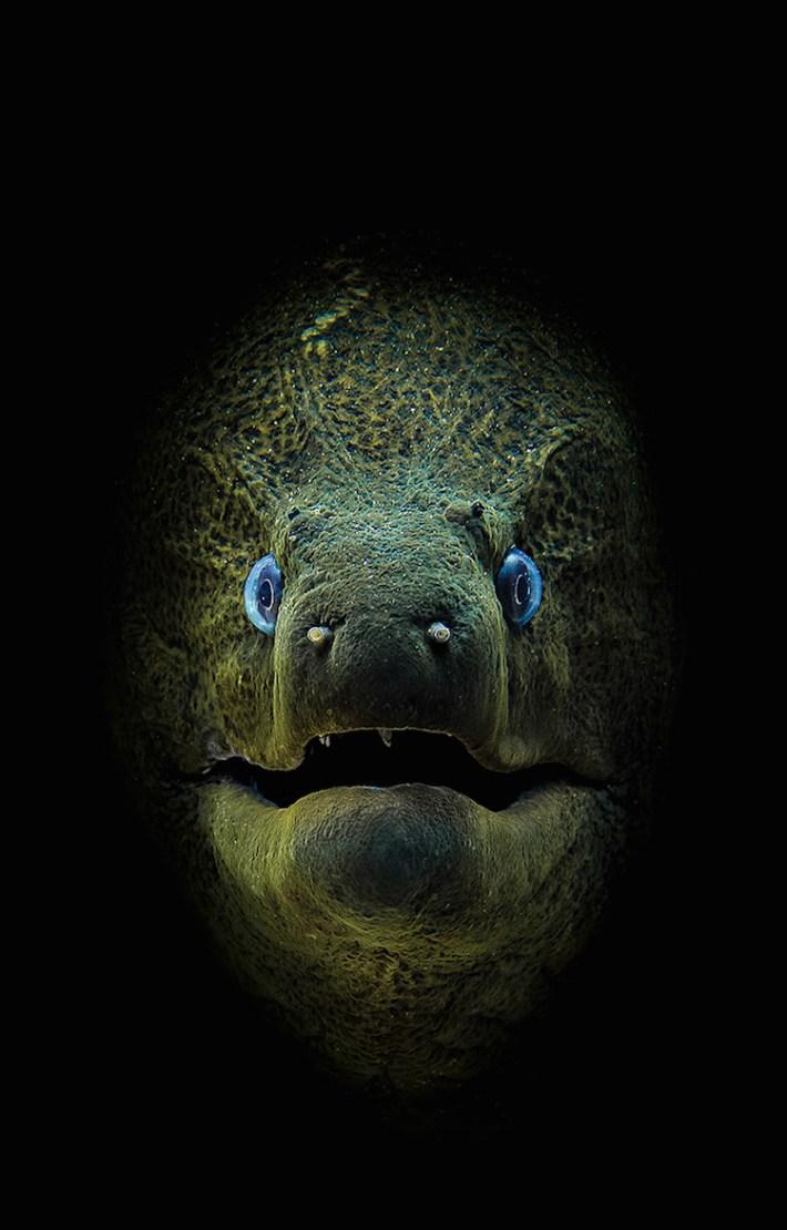 Scuba Diving 3 magazine concurso fotografía submaina mar vidasalvaje
