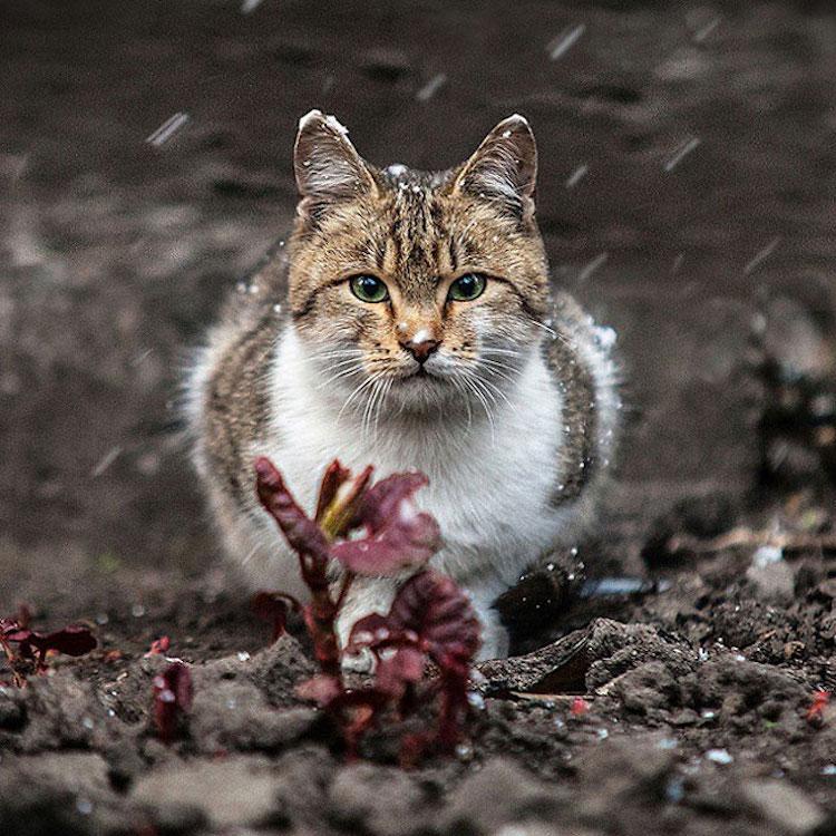 SergeyPolyushko animals 09
