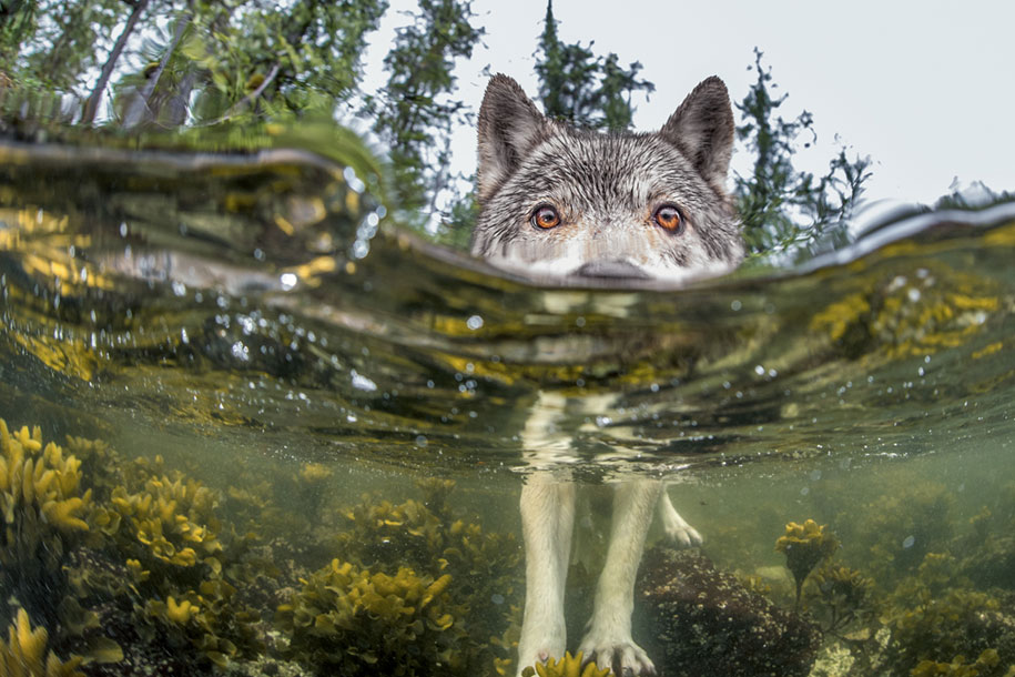 National Geographic best Photos 2015 5