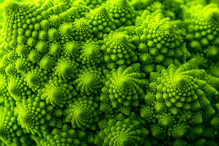 Geometrical Plants plantas geometricas Cultura Inquieta2