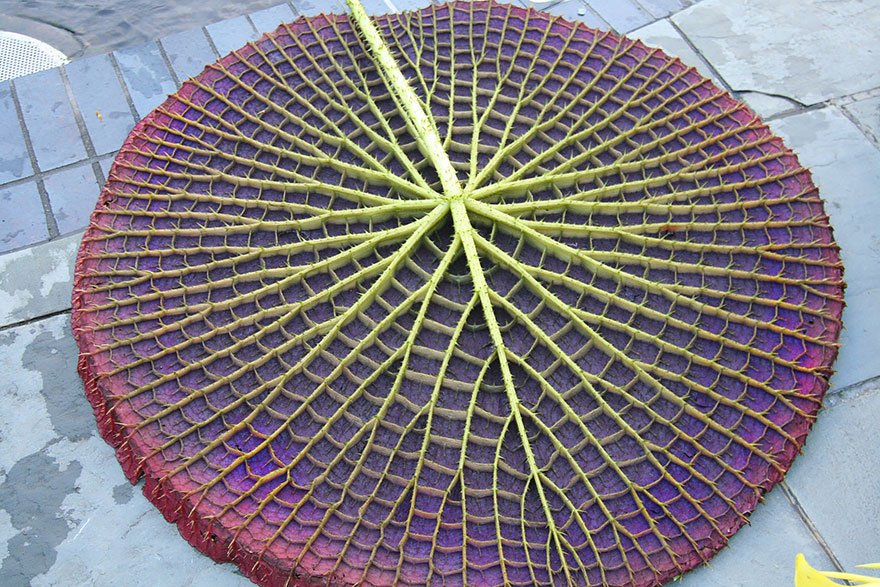 Geometrical Plants plantas geometricas Cultura Inquieta4