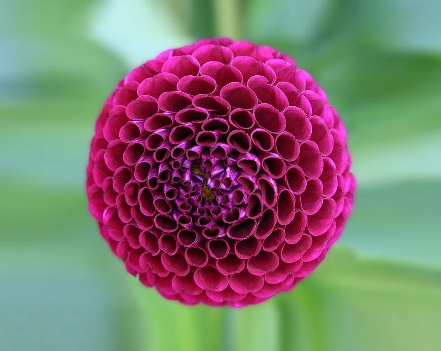 Geometrical Plants plantas geometricas Cultura Inquieta5
