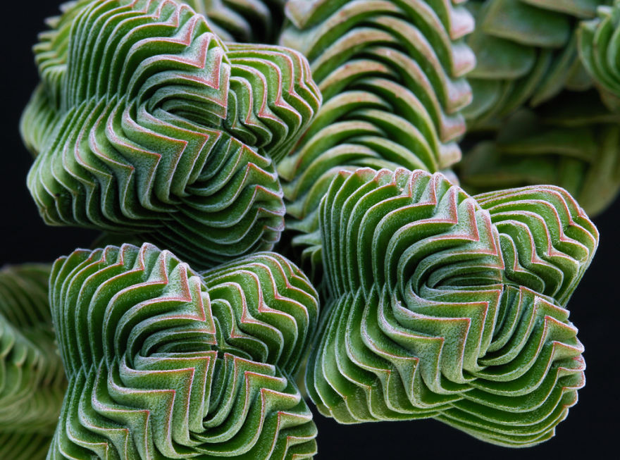 Geometrical Plants plantas geometricas Cultura Inquieta6