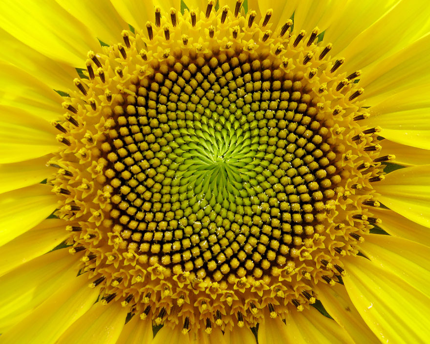Geometrical Plants plantas geometricas Cultura Inquieta7