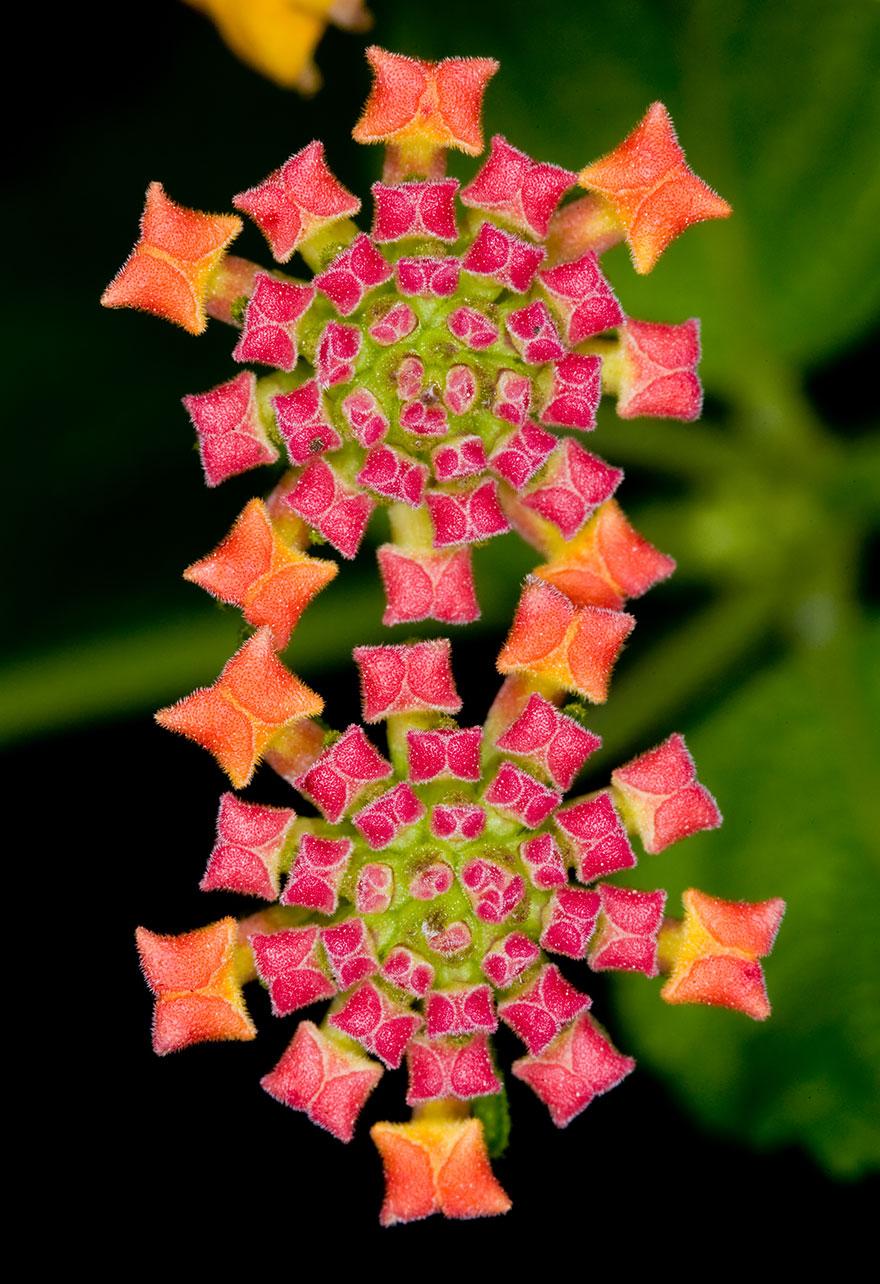 Geometrical Plants plantas geometricas Cultura Inquieta8