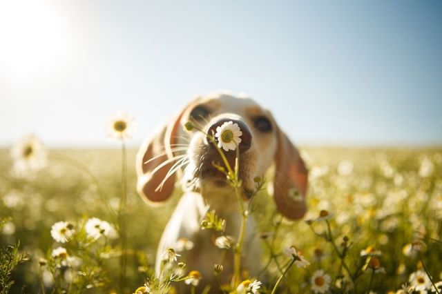 dog photographer culturainquieta5