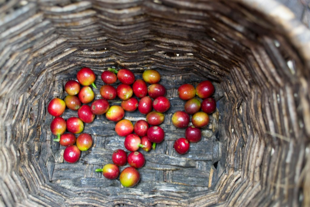 Coffee tour; Salento, Colombia