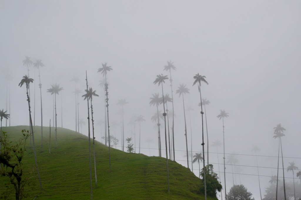 Valle De Cocora, Salento, Colombia