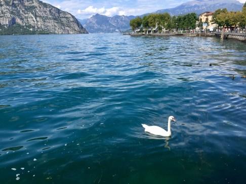 Swan LG