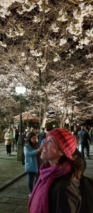 Night Sakura Bloom