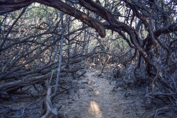 The start of the trail goes through a sandy area