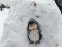 Building Igloo Penguin Cultural Glimpse