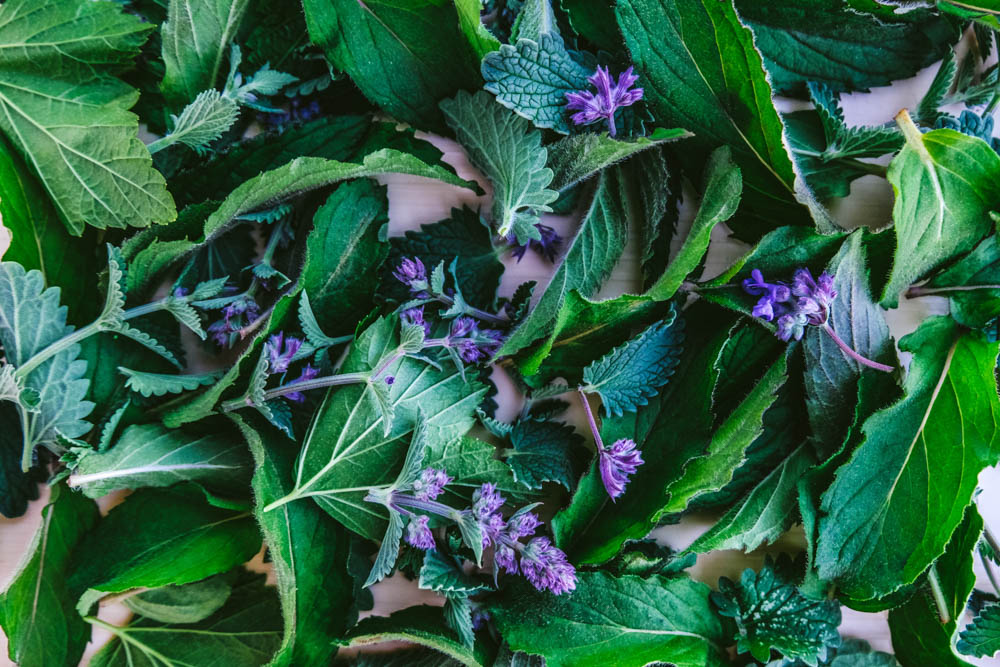 CulturallyOurs Summer Foraging Recipes From Russia