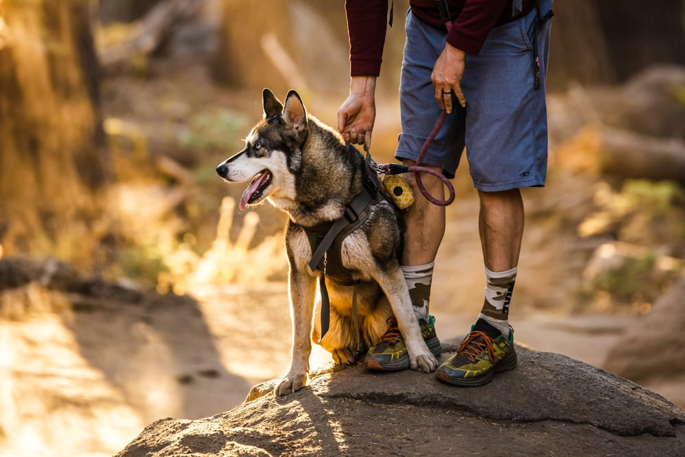 CulturallyOurs Hiking Trail Etiquette Guidelines With Dogs
