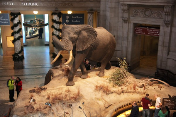 World Top Ten Famous Museum Animals Institute