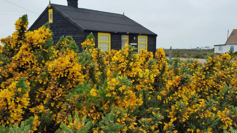 Prospect Cottage Garden Dungeness