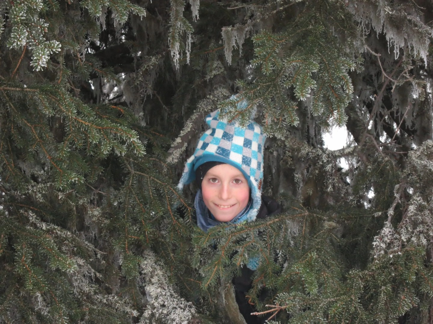 Jake in a tree