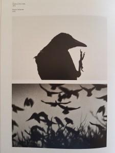 "Fotofestivalen i Arles. ""The Incurable Egoist"". Fotograf; Masahisa Fukase. Serien, The Solitude of Ravens, fra 70-tallet. Foto fra utstillingen: Siri Wolland."