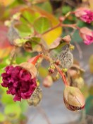 Fra Botanisk have i Oslo. Foto: Siri Wolland.
