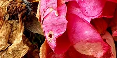 Fra Botanisk have i Oslo Foto: Siri Wolland.