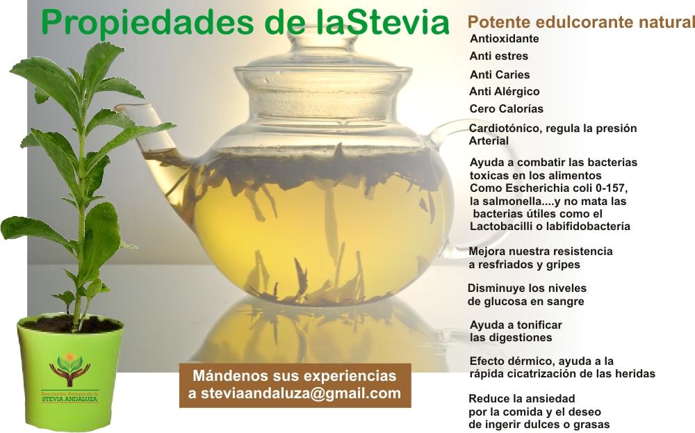 ¿Cómo hacer en casa extracto de stevia?