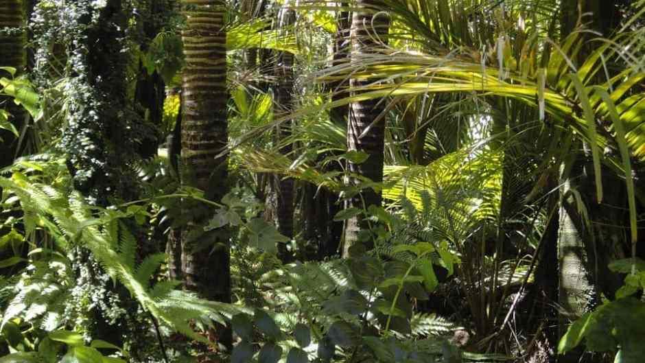 forêt primaire