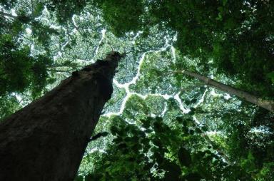 arbres_etonnants_timidite_des_cimes_004