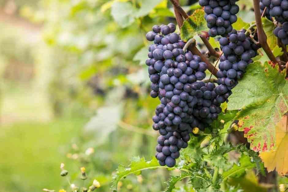 wine-980218_960_720
