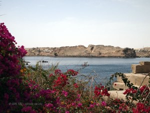 Flowers and water, Philae Temple, Lake Nasser