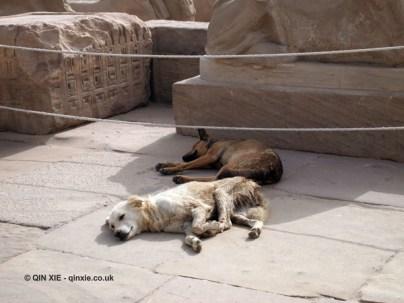 Sleeping dogs, Karnak Temple, Luxor