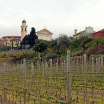 Vineyard, Bisson Winery