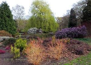 Colourful plants in Isabella Plantation, Richmond Park