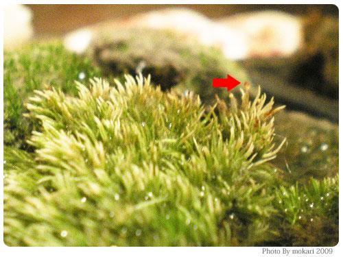 20090204-1 第5回「苔の変化。苔の種類を調べる」