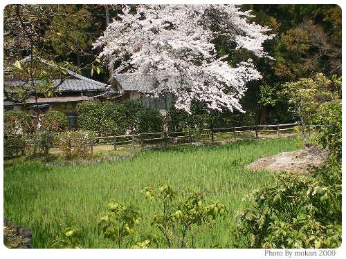 20090410-2 京都市花見:大田神社2009年