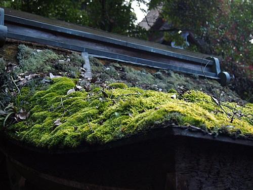 P1020595 2014年初詣は上賀茂神社へ。