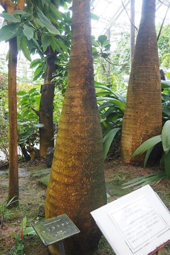 P1254454 植物園 温室 植物
