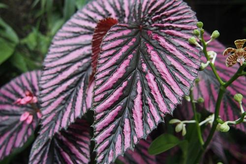 P1254475  植物園 温室 植物