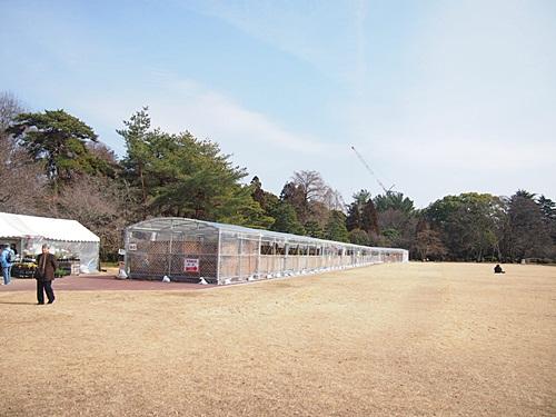 P2263204 梅を見に、京都府立植物園へ(2013年)