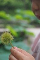 P6166235 植物園でアジサイ