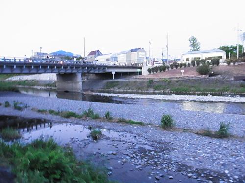 R1156854 鴨川にヌートリアがいるらしいので探してみたが今回は見つからず