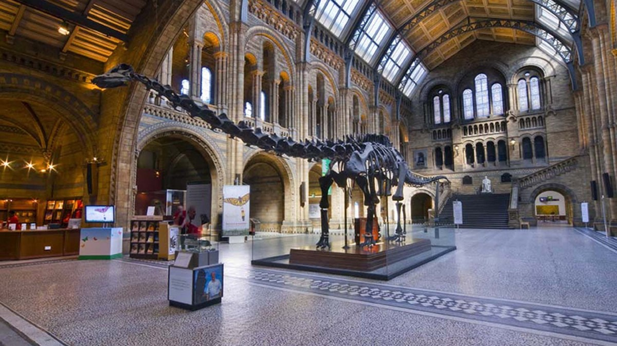 Dippy the Dino is going on tour from the NHM