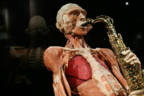 Places to visit in Amsterdam - bodyworlds