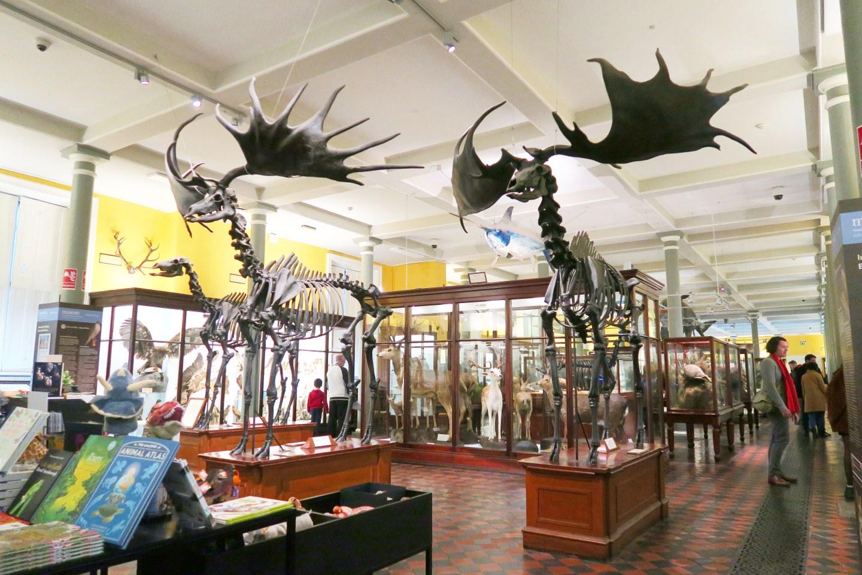 36 hours in Dublin - dead zoo