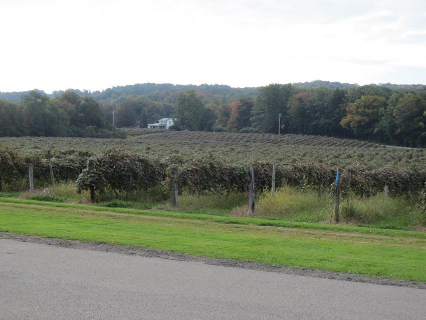 ny-vineyard2