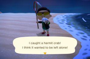 hermit crab Animal Crossing